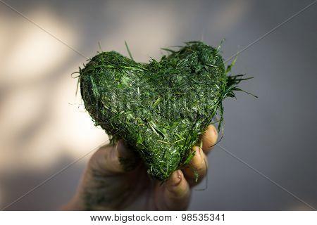 Hand Holds Heart Shaped Of Fresh Cut Grass