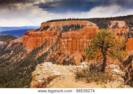 Hoodoos Tree Bryce Point Bryce Canyon National Park Utah