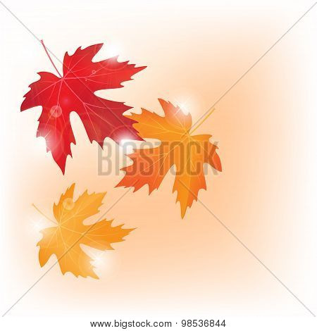 vector autumn colored maple leaves on white background
