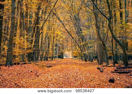 Pathway in the autumn forest