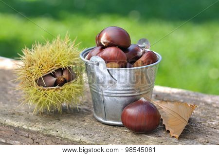 Chestnuts In Bucket
