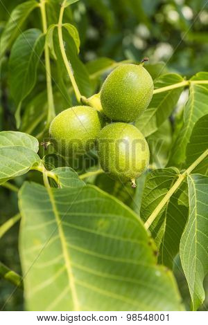 Three Fruits Walnut