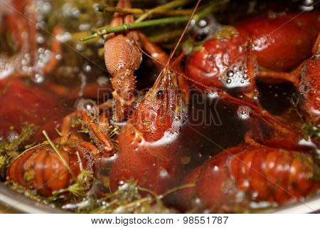 Red Boiled Crayfish With Dill