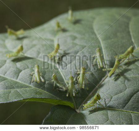 Leaf Attack