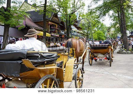 Horses At Krupowki Str, Zakopane