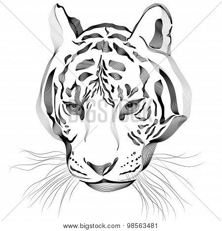 Original artwork tiger with dark stripes, isolated on white background, and sepia color version, vec