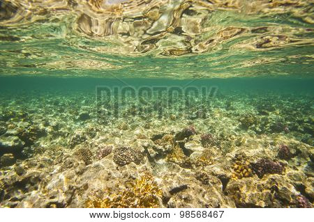 Underwater Tropical Coral Reef