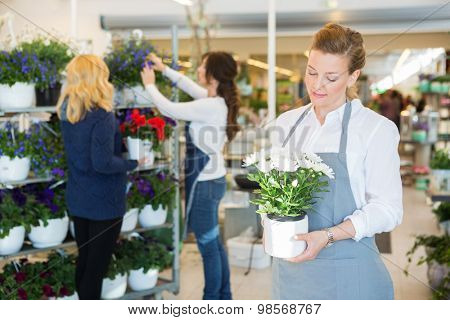 Salesgirl holding flower pot with colleague assisting customer in background at shop
