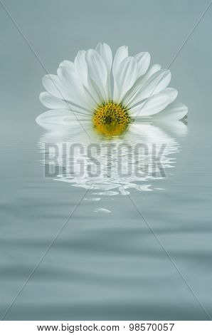 White Flower Reflected In Blue Rippled Water