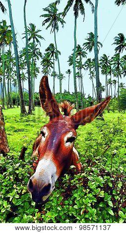 Donkey Funny Face