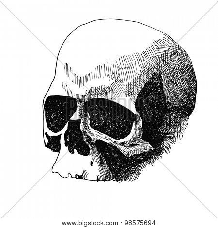 Skull. Hand drawn. JPEG version
