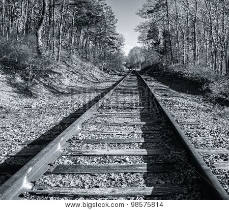 Vintage Rail Line  On Cape Cod
