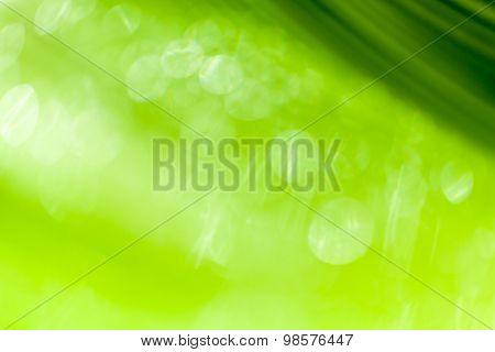 Beautiful Bokeh  Background - Water Drops On The Green Banana Leaf.