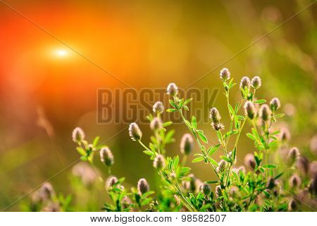 Nice summer flower meadow against sunset
