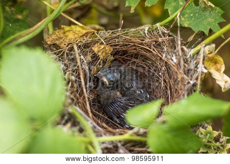chick in the nest.