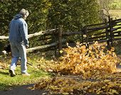 picture of leaf-blower  - man at a country home blowing leaves for fall clean up - JPG
