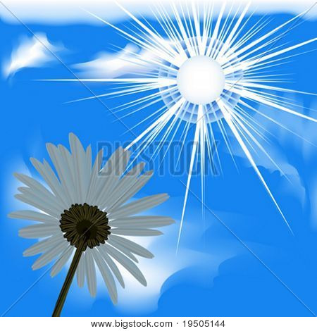 Vector design. Camomile. Sky blue  from the bottom. VECTOR (See Jpeg Also In My Portfolio)