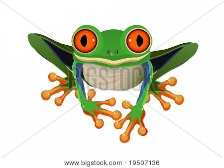 Frog  Red-eye tree isolated on a white background JPG (See Vector  Also In My Portfolio)