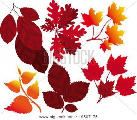 Hojas y ramas un conjunto de elementos para su diseño otoño VECTOR (ver Jpeg también en mi cartera)