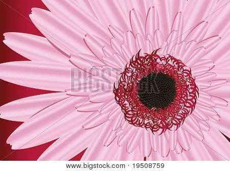 Most pink Gerbera. Crop.