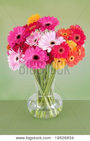 vase of colorful gerber daisies