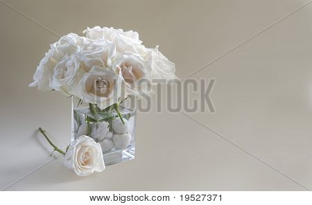 white roses in vase catch late afternoon light - room for copy