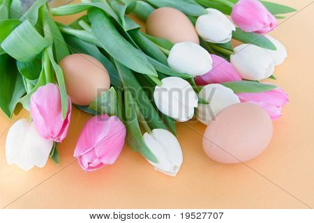 pink and white tulips and brown eggs on orange background -  easter