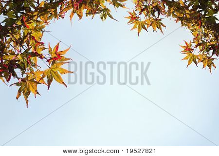 frame of maple leaves against blue sky for fall