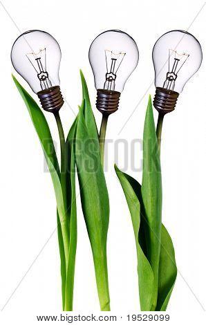 tulipanes de bombilla lámpara aislados en blanco con trazado de recorte