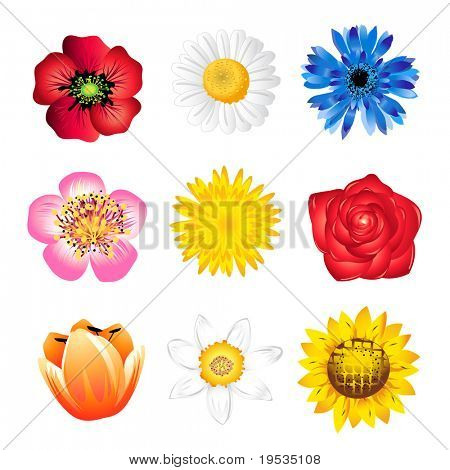 Set of vector  spring flowers isolated on white
