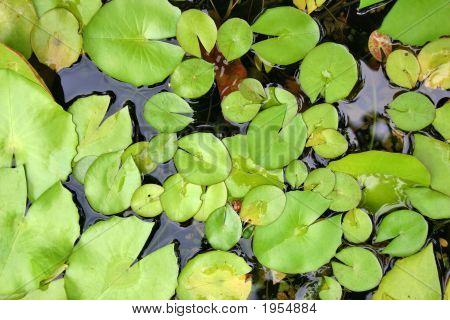 Lilly Pond Background