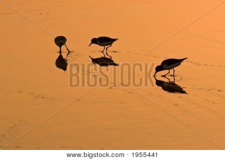 Wading Birds On Golden Sand