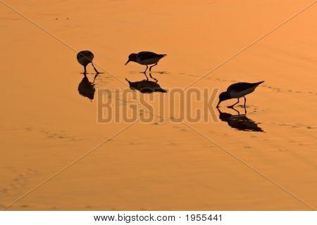 Wading Birds On Golden Sand