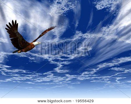 Adler auf einem Hintergrund von den dunklen blauen Himmel fliegen