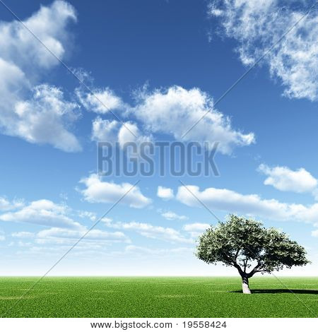Alone tree and beautiful sky with clouds.