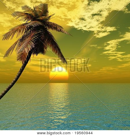 Sunset coconut palm tree on ocean coast.