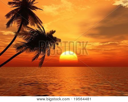 Sunset coconut palms tree on a ocean coast