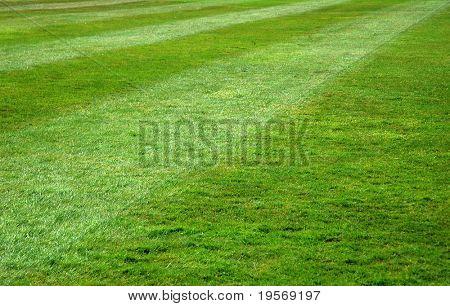 Freshly mown green grass lawn