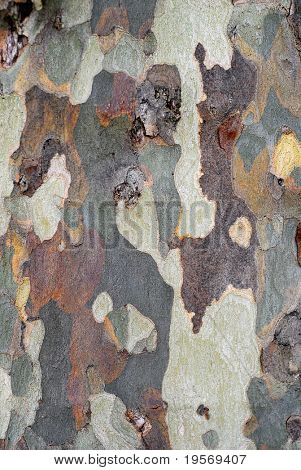 Natural bark texture background