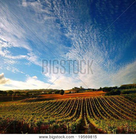 Italian vineyard with dramatic evening sky, just before sunset