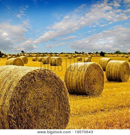 Oro balas de heno en el campo en un día soleado perfecto