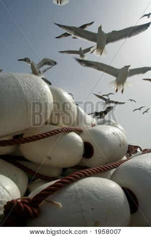 Gulls Over Fishing Tackle