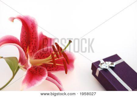 Stargazer Lily And Gift Box