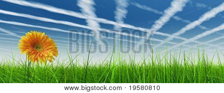 high resolution 3d green grass over a blue sky with white clouds and plane traces or trails as background and a nice yellow gerbera flower at horizon. Ideal for nature,green or sport designs.