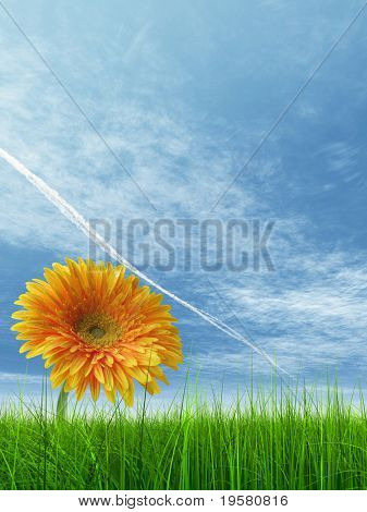 high resolution 3d green grass over a blue sky with white clouds and a plane trace or trail as background and a nice yellow gerbera flower at horizon. Ideal for nature,green or sport designs.