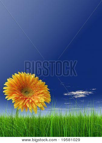 hierba verde 3d de alta resolución sobre un cielo azul con nubes blancas como fondo y un agradable ger amarillo
