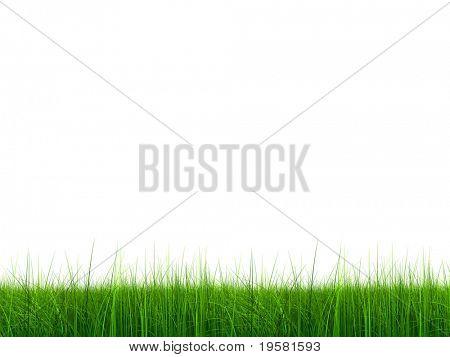 3D Gras auf maximale Qualität gerendert isolated on white Background, ideal für Natur, Umwelt