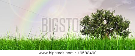 3d green grass over a nice sky banner with clouds and a rainbow as background and a clear horizon with a natural green but old baobab tree. Ideal for nature,green or sport designs.