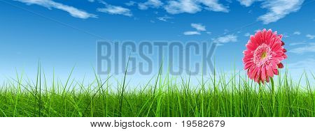 high resolution 3d green grass over a blue sky banner with white clouds as background and a nice pink gerbera flower at horizon. Ideal for nature,green or sport designs.