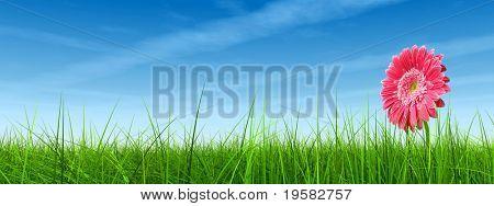 hochauflösende 3d grüne Gras über ein blauer Himmel mit weißen Wolken und Flugzeug-Spuren oder Wanderwege als backg